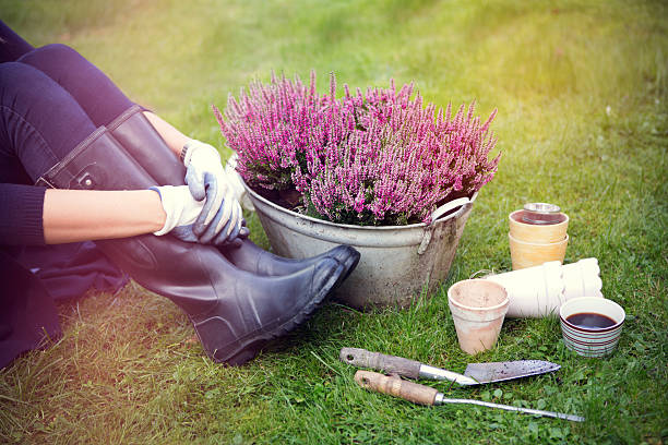 Woman in garden. Woman planting flowers in garden. heather stock pictures, royalty-free photos & images