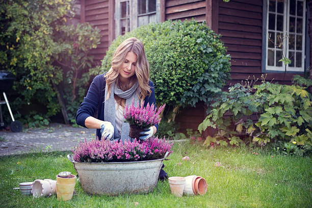 Woman in garden. Attractive woman planting flowers in garden. heather stock pictures, royalty-free photos & images