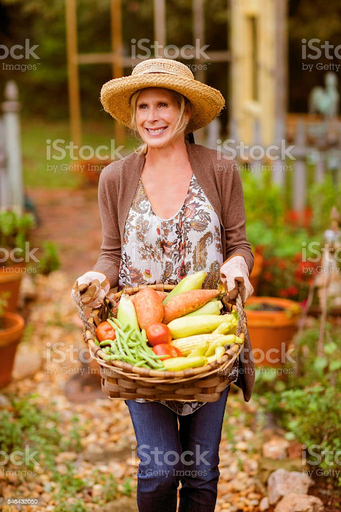 Woman in her garden carrying a basket  full of garden vegetables. stock photo