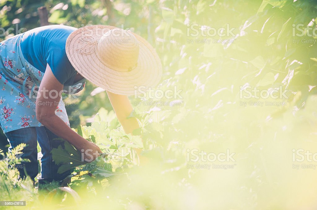 Woman in her Vegetable Garden Lizenzfreies stock-foto