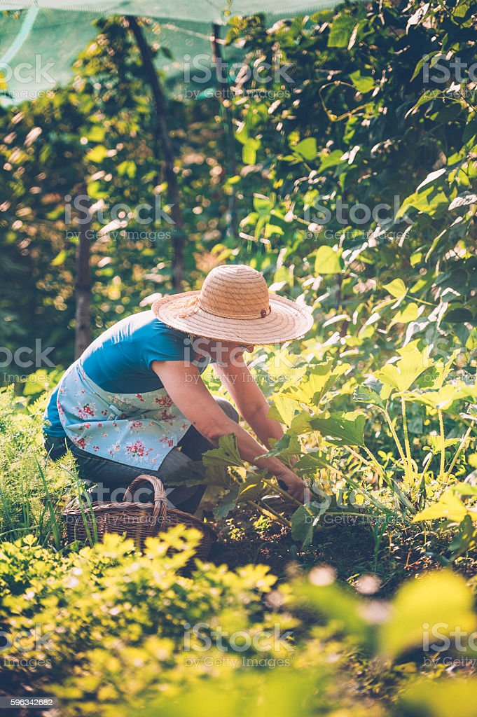 Woman in her Vegetable Garden royalty-free stock photo