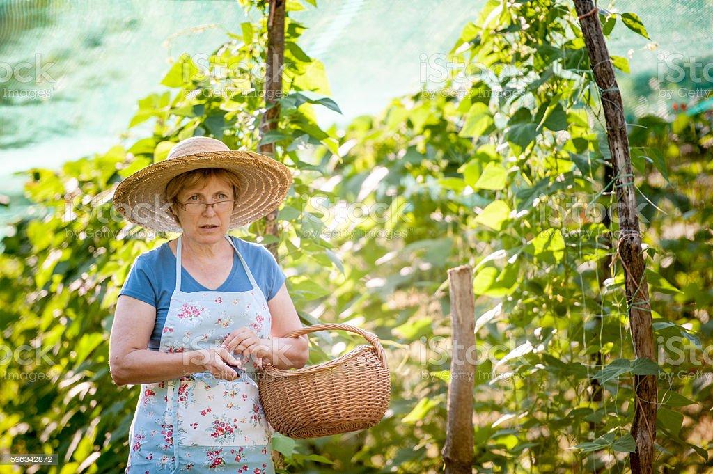 Woman in her Vegetable Garden Lizenzfreies stock-foto