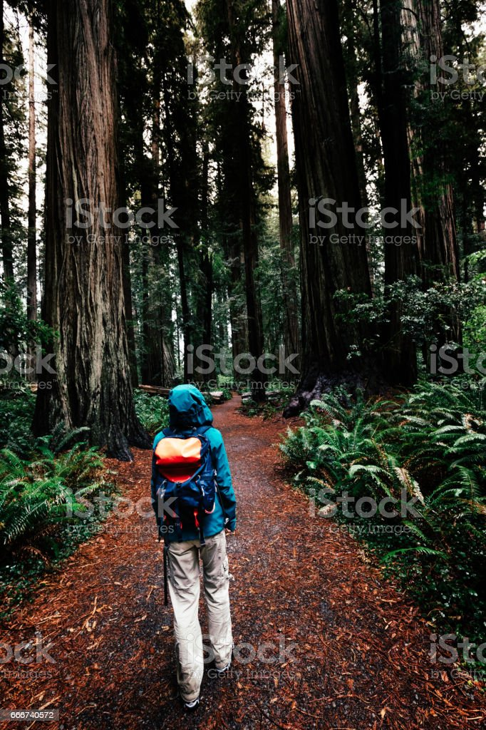 Woman in Jedediah Smith Redwoods State Park, California stock photo