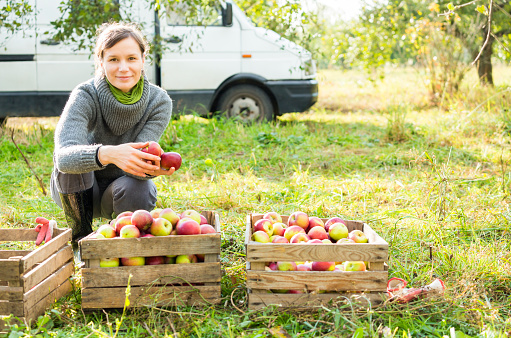 Woman in organic apple orchard during autumn harvest. Cargo car in background, green grass, trees and stuff. Smilnkg woman, maybe businesswoman.