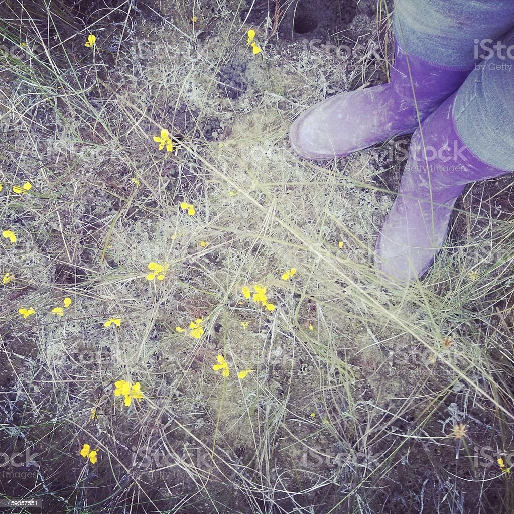 Woman in Purple Boots Stands over Yellow Wildflowers royalty-free stock photo