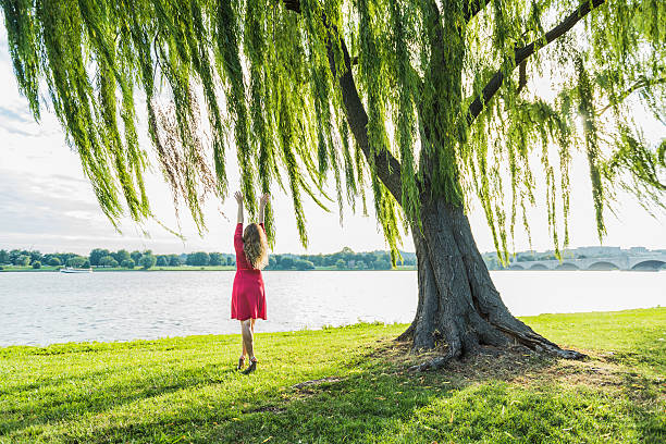 woman in red dress reaching to willow tree and wind - 버드나무 뉴스 사진 이미지