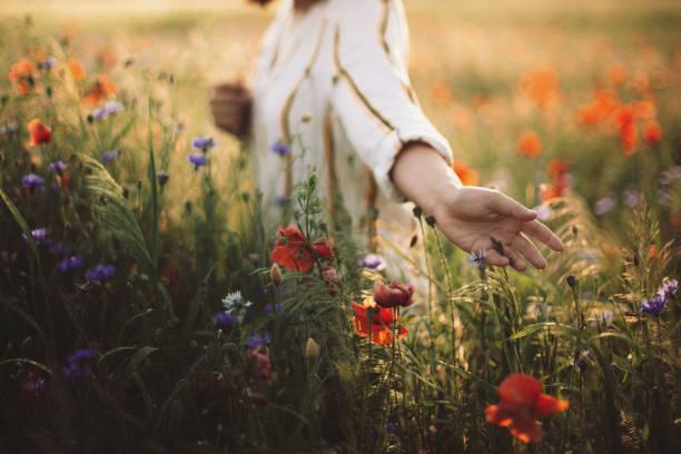 身著質樸服裝的女人在夕陽下收集罌粟和野花,在夏天的草地上散步。大氣真實的時刻。複製空間。手在鄉下摘花。農村生活緩慢 - 大自然 個照片及圖片檔