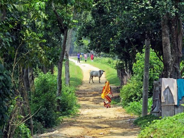 사리도로, Srimangal, 방글라데시를 걷고 있는 여자 스톡 사진