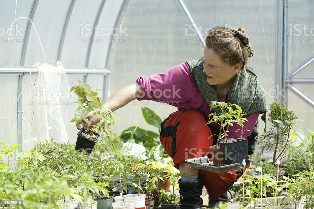 Woman In The Greenhouse royalty-free stock photo