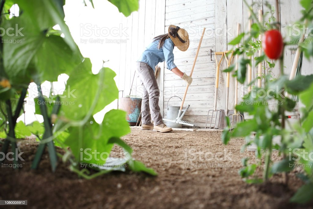 Woman In The Vegetable Garden With Rake From The Wooden Wall Of