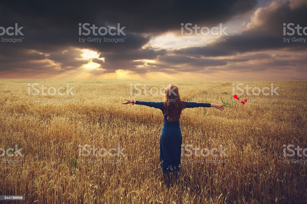Woman in the wheat field stock photo
