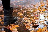 Concept of autumn rainy weather