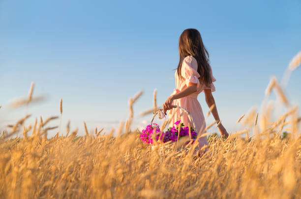 Woman in wheat field at sunset stock photo