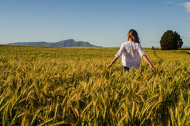 woman in wheat field stock photo