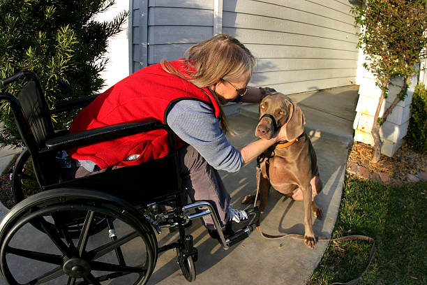 Woman in wheelchair with dog picture stock photo
