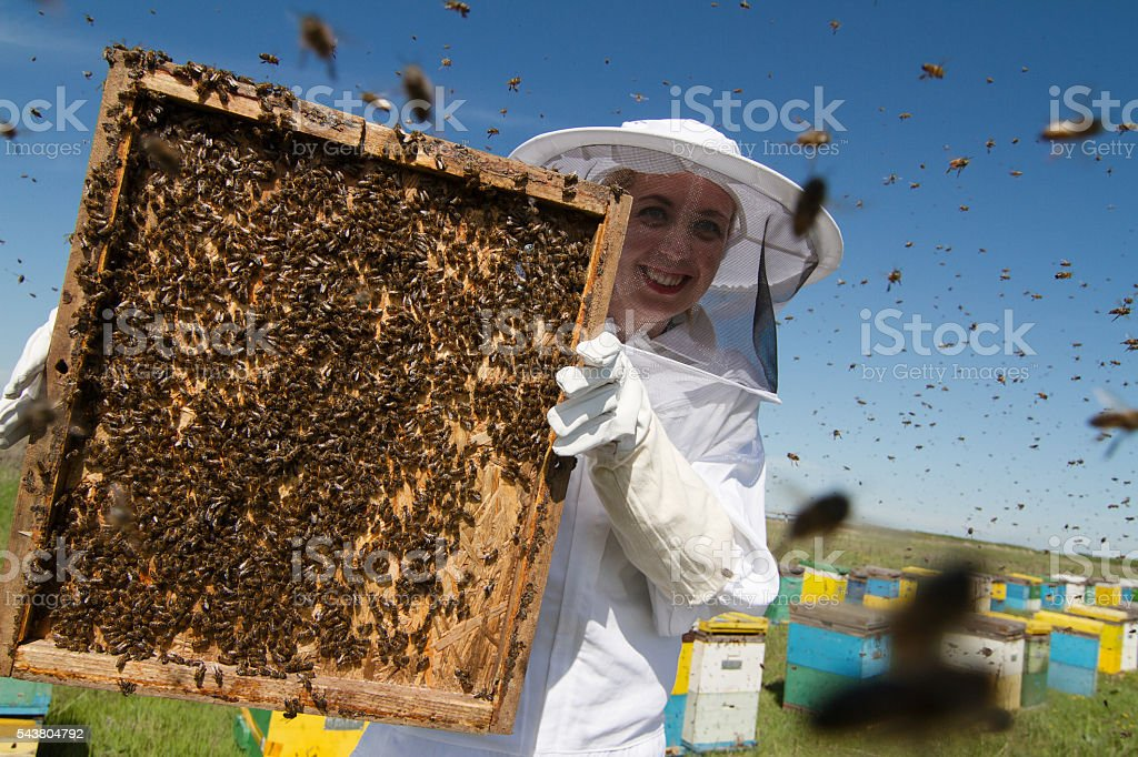 Woman in white suit beekeeping stock photo