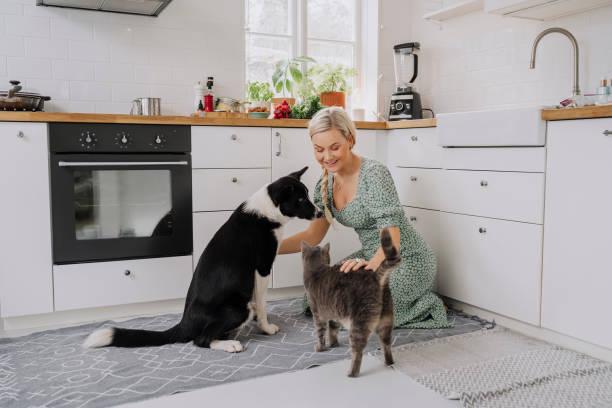 mujer en el interior de su cocina en casa con mascotas gato y perro - foto de stock