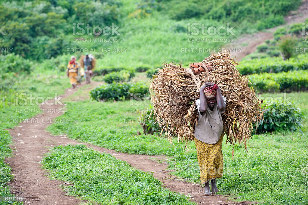Woman is carrying a heavy load of beans, Congo, Africa royalty-free stock photo