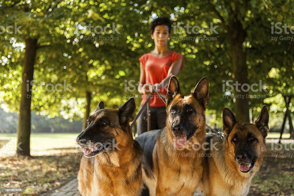 Woman is dog sitting with three german shepherds stock photo