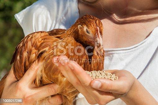 Cute girl enjoying feeding chicken in farm at sunny day