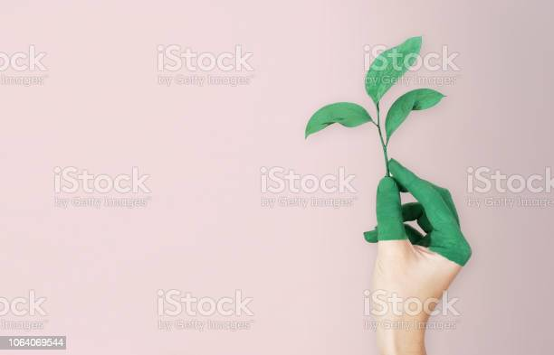 Woman is holding green leaf branch with painted hand pink soft picture id1064069544?b=1&k=6&m=1064069544&s=612x612&h=dcu4m6za5vqkgt1tuz7vaooljqzxis jpwppcbp g6q=
