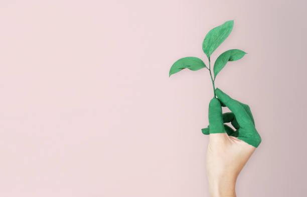 Woman is holding green leaf branch with painted hand, pink soft background Woman is holding green leaf branch with painted hand, pink soft background environmental conservation stock pictures, royalty-free photos & images