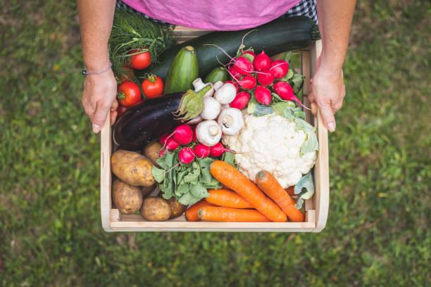 woman is holding wooden crate full of vegetables from organic garden. - comida sustentavel imagens e fotografias de stock