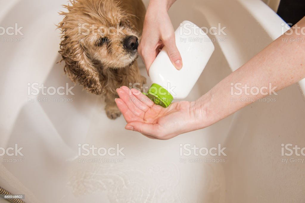 Woman is pouring shampoo on his hand stock photo