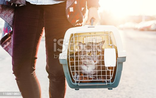 A woman is transporting a cat in a special plastic cage or carrying bag to a veterinary clinic