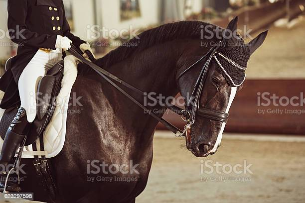 Woman jockey with his horse picture id623297598?b=1&k=6&m=623297598&s=612x612&h=kervjtbh6ngkcwsluhc gusa j1amzzqvgalvlddwkm=