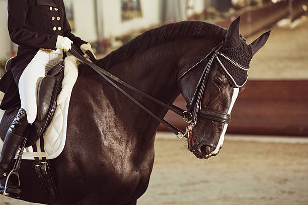 woman jockey with his horse - dressage photos et images de collection