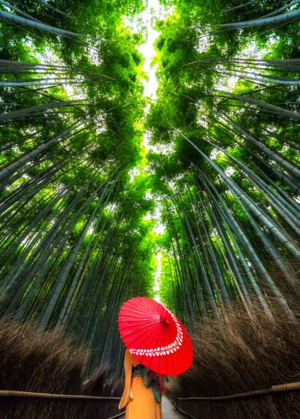 kimono de mujer y paraguas en el bosque de bambú arashiyama, kioto. japón - kyoto fotografías e imágenes de stock