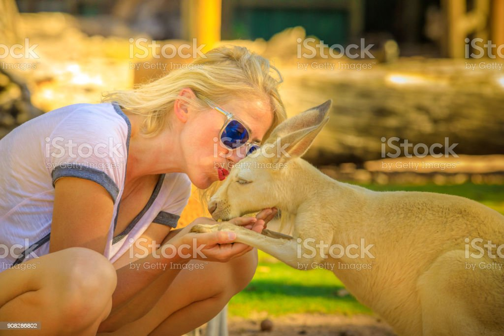 Woman kissing Kangaroo stock photo