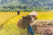 Woman Raised Hands at Rice Fields