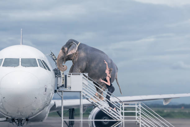 Woman loading elephant on board of plane stock photo