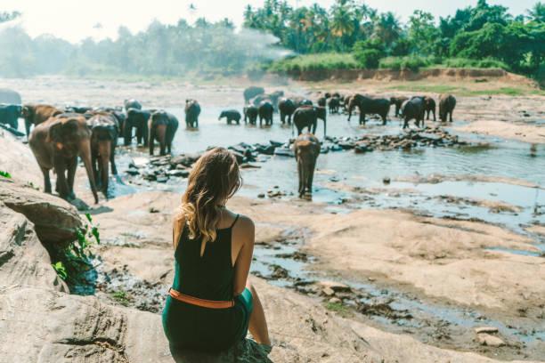 mulher olhando para elefantes tomando banho no pinnavella - viagem pela vida selvagem - fotografias e filmes do acervo