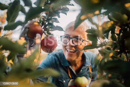 1056015258 istock photo Woman looking at homegrown apples 1056010550