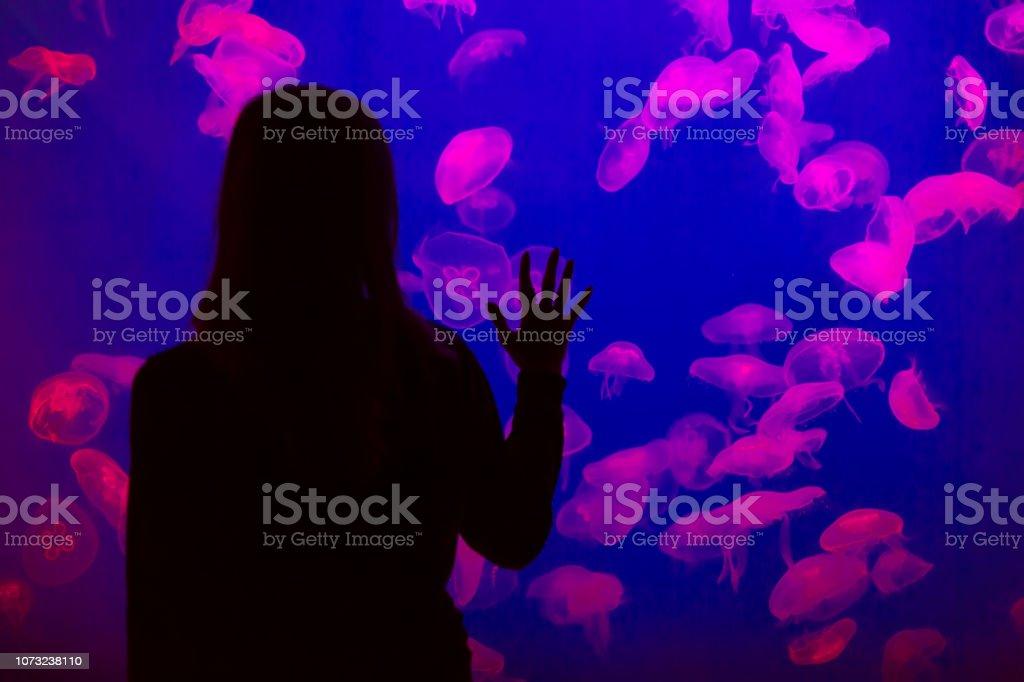 Woman looking at jellyfish in aquarium glass - material,  fish, undersea, water, aquarium, Aquarium, woman Adult Stock Photo