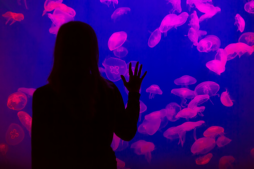 Woman Looking At Jellyfish In Aquarium Stock Photo - Download Image Now