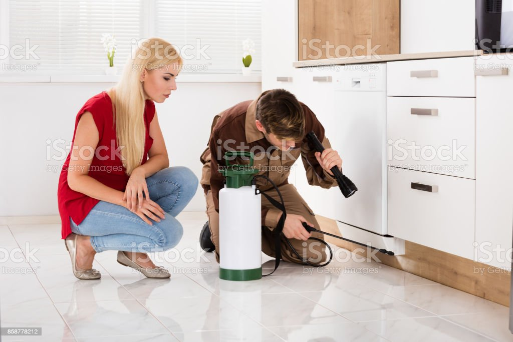 Woman Looking At Male Worker Spraying Insecticide stock photo