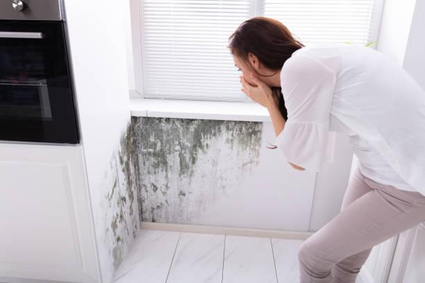 vrouw kijken naar schimmel op muur - meeldauw stockfoto's en -beelden