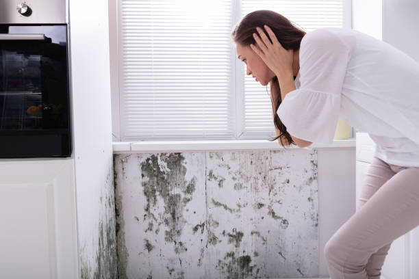 Woman Looking At Mold On Wall Side View Of A Young Woman Looking At Mold On Wall fungal mold stock pictures, royalty-free photos & images