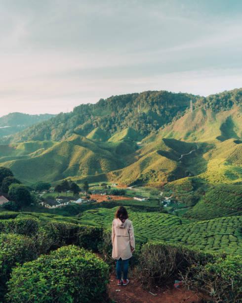 blick auf teeplantagen frau - insel taiwan stock-fotos und bilder