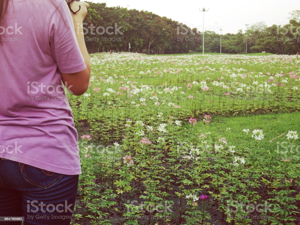 Woman looking color flower blooming on a field of flowers in the summer. royalty-free stock photo