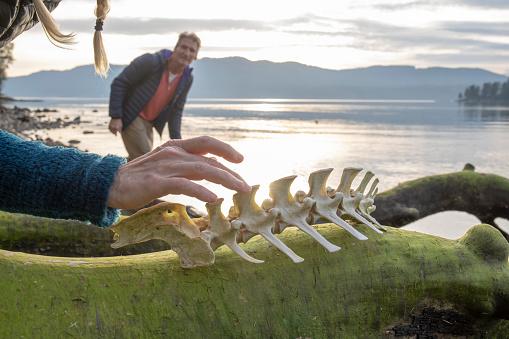 Woman looks at animal vertebrae on beach