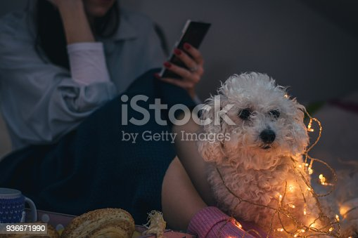 618750646 istock photo Woman lying on bed with dog 936671990