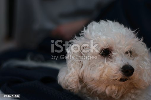 618750646istockphoto Woman lying on bed with dog 936675090