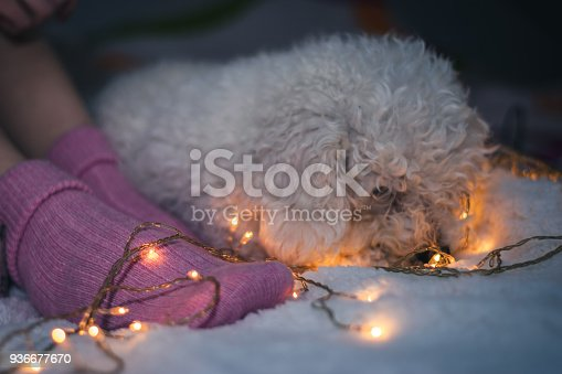 618750646istockphoto Woman lying on bed with dog 936677670