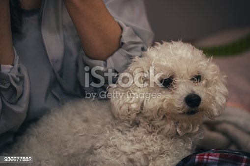 618750646 istock photo Woman lying on bed with dog 936677882