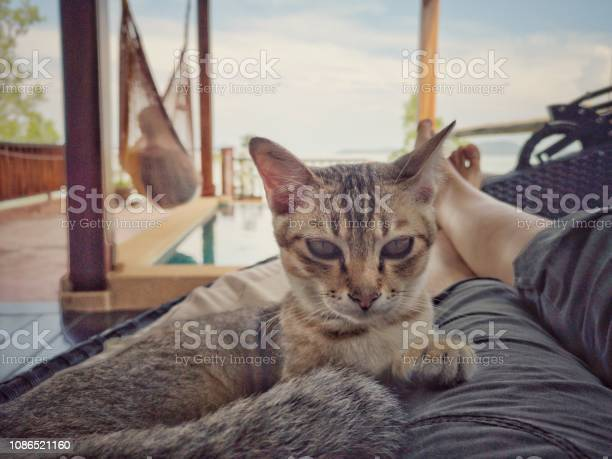 Woman lying on outdoor sofa with lap cat picture id1086521160?b=1&k=6&m=1086521160&s=612x612&h=f1nzhjblde7tlcsifhuhl0bhdm7jj5zkuqbmc9kdeee=